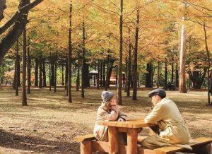 Kinh nghiệm du lịch Hàn Quốc tháng 10 – Trải nghiệm chuyến đi trọn vẹn lá vàng xứ kim chi