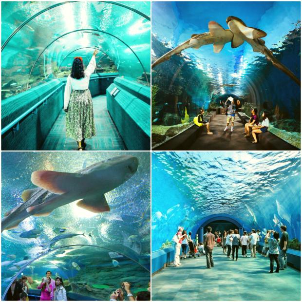 Thủy cung Underwater World Pattaya