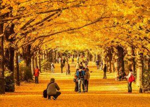 5 lý do khuyên bạn chọn du lịch Nhật Bản mùa thu
