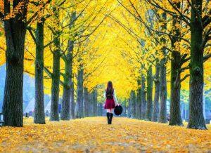 Những cảnh đẹp mùa thu Hàn Quốc không thể bỏ qua