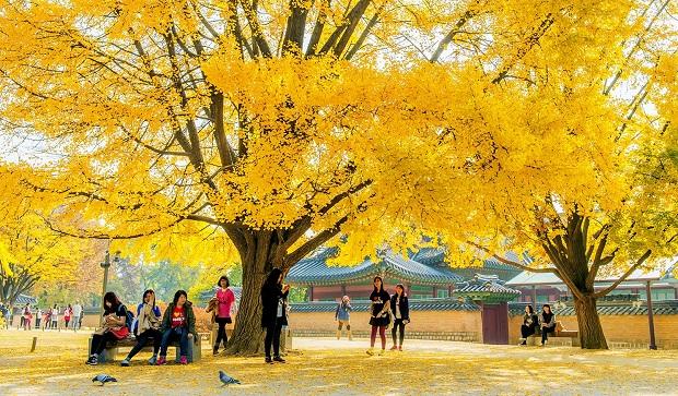 Tận hưởng mùa thu Seoul – Eveland – Nami đảo nổi sông Hàn 5N4Đ KH từ Hà Nội