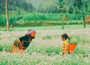 Top 5 địa điểm ngắm hoa tam giác mạch Hà Giang đẹp nhất?