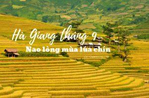 Du lịch Hà Giang tháng 9 – Đẹp nao lòng mùa lúa chín