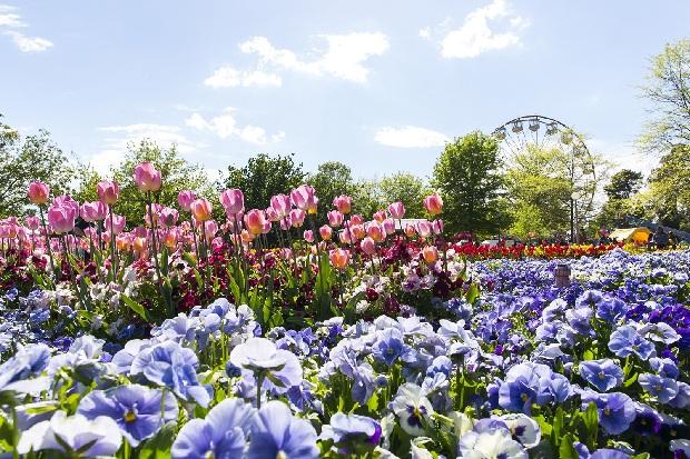 Lễ hội hoa Floriade Canberra | Tour mùa xuân nước Úc 5N4D | Sydney - Canberra