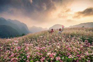 Đắm chìm giữa mùa tam giác mạch Hà Giang đẹp tựa thiên đường