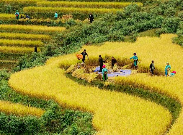 Kinh nghiệm du lịch Hà Giang mùa lúa chín 2021