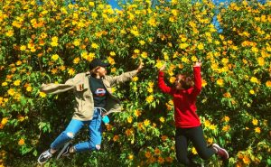 Du lịch Đà Lạt tháng 9 – Nức lòng hoa dã quỳ đầu thu