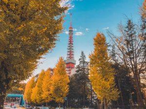 Tour Nhật Bản Tokyo – Nikko – Yamanashi – Núi Phú Sĩ 5N5Đ