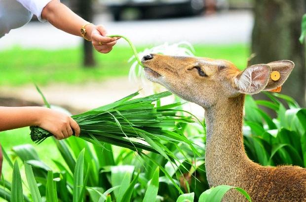 Tour du lịch Thái Lan Safari World 5N4Đ | Bangkok Pattaya – Chùa Wat Arun