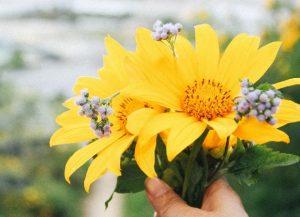 Tour Đà Lạt – Đường Hầm Đất Sét – Cà Phê Mê Linh Mùa hoa dã quỳ 3N3Đ