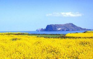 Tour du lịch Hàn Quốc 6 ngày 5 đêm: Seoul – Jeju – Đảo Nami – Everland