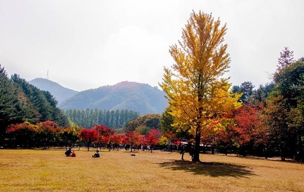 Tour Hàn Quốc Seoul – Jeju – Đảo Nami – Everland 6N5Đ