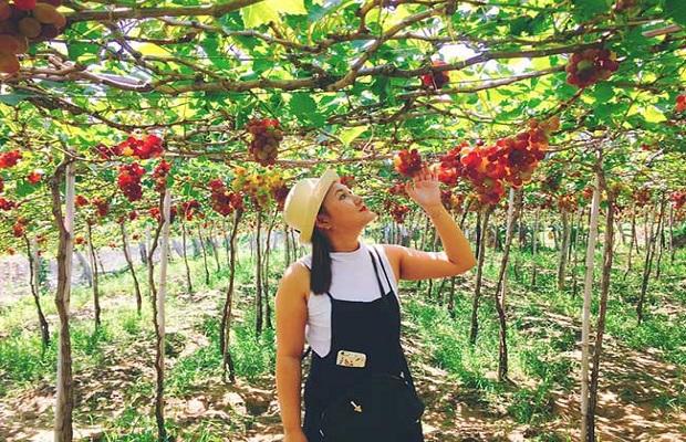 Tour du lịch TP.HCM – Nha Trang 3N2Đ | Đảo Tình Yêu – Vườn Nho – Thảo Nguyên Mông Cổ