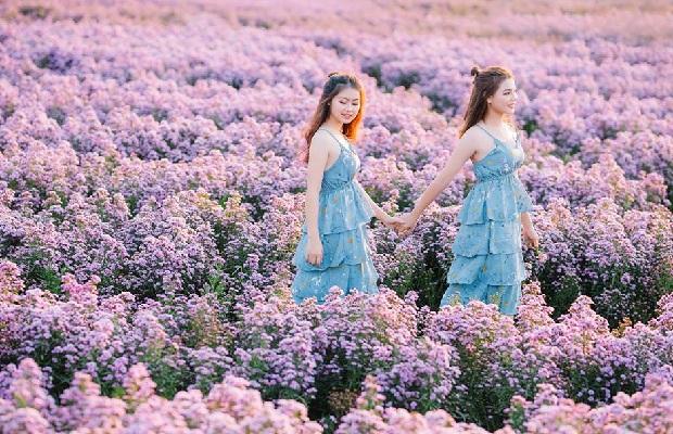 Tour du lịch TP.HCM – Vũng Tàu 1 ngày | Du thuyền Marina – Cánh đồng cừu – Ngắm hoa thạch thảo