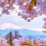 Tour du lịch Nhật Bản từ Hà Nội: Tokyo – Fuji – Nagoya – Kyoto – Osaka mùa hoa anh đào 6N5Đ