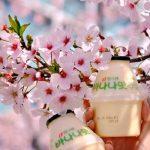 Tour du lịch Hàn Quốc từ Đà Nẵng 5N4Đ: Tận hưởng mùa hoa anh đào xứ kim chi