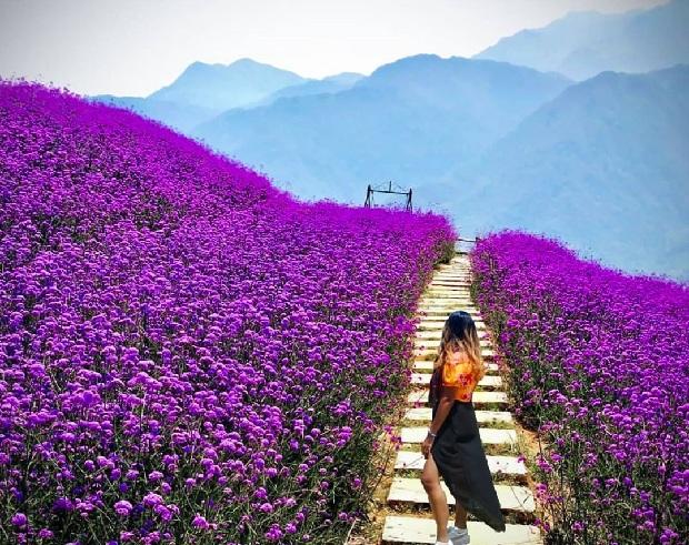 Du lịch Sapa - Vườn hoa Hàm Rồng