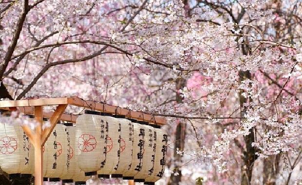 Du lịch mùa Lễ hội hoa anh đào