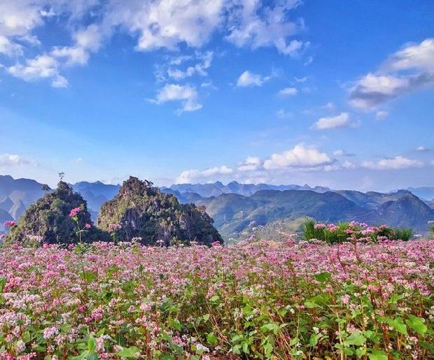 Bản đồ phượt Hà Giang ngấm hoa tam giác mạch
