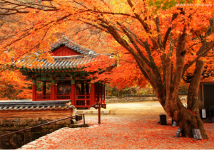 Bạn có biết mùa thu Hàn Quốc vào tháng mấy không?