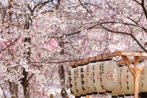 [MỚI] Trọn bộ Kinh Nghiệm du Lịch Nhật Bản tháng 4 chi tiết, hữu ích