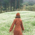 Tour du lịch Mai Châu Mộc Châu 2N1Đ | Ngắm mùa hoa cải trắng trên cao nguyên