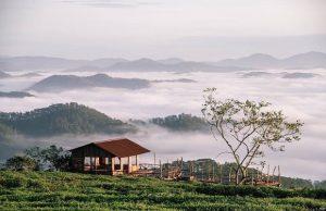 Tour Sài Gòn Đà Lạt 4 ngày 3 đêm | Tham quan Đồi chè Cầu Đất – Fresh Garden – Chùa Linh Phước