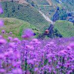 Tour Sapa – Cát Cát – Hàm Rồng – Fansipan 2N3Đ | Khởi hành hàng ngày từ Hà Nội