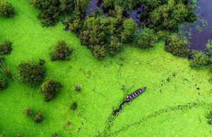 Tour Tràm Chim Làng Hoa Sa Đéc 2N1Đ | Hòa mình với thiên nhiên bao la, xanh mát