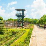 Tour du lịch Côn Đảo Đi Máy Bay 2N1Đ: Hành trình khám phá hòn đảo thiêng