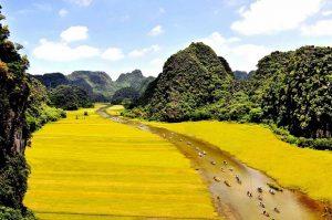 Dắt tay nhau đi du lịch Ninh Bình mùa lúa chín đẹp mê mẩn