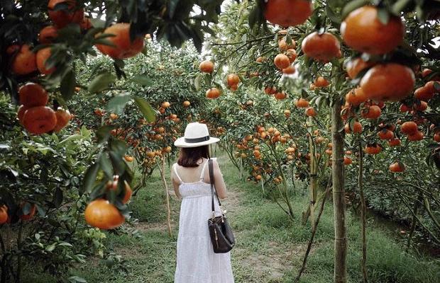 Tour Đồng Tháp 1 Ngày: Khám phá Làng hoa Sa Đéc – Vườn quýt hồng Lai Vung – Kiến An Cung