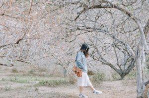 Du lịch Mộc Châu tháng 3 có gì hấp dẫn? Đắm chìm trong những cánh đồng hoa ban tinh khiết